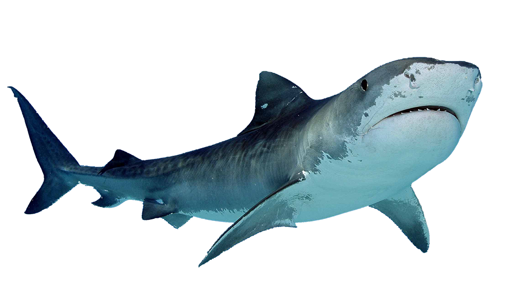 Shark Defence | Best reviews of shark repellent devices