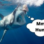 Sharks That Attack Humans