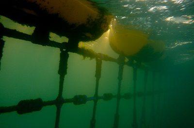 Do Shark Nets Work?