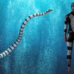 Shark Deterrent Wetsuit – Look Poisonous