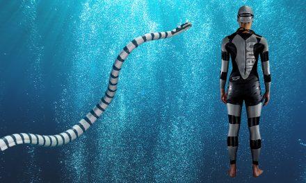 Shark Deterrent Wetsuit – Look Poisonous