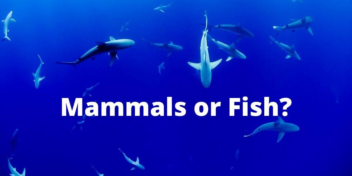 Are Sharks Mammals?