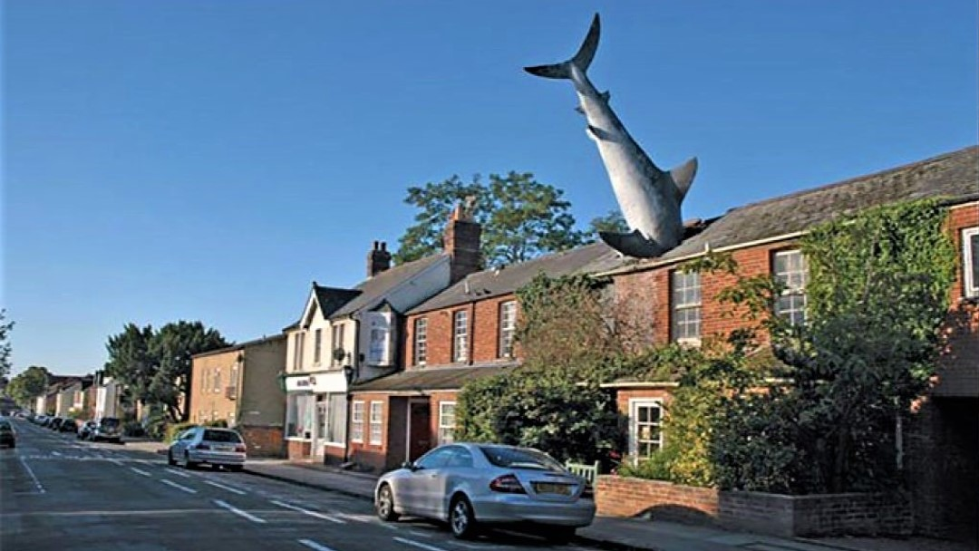 Where Do Sharks Live?