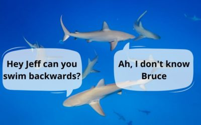 Can Sharks Swim Backwards?