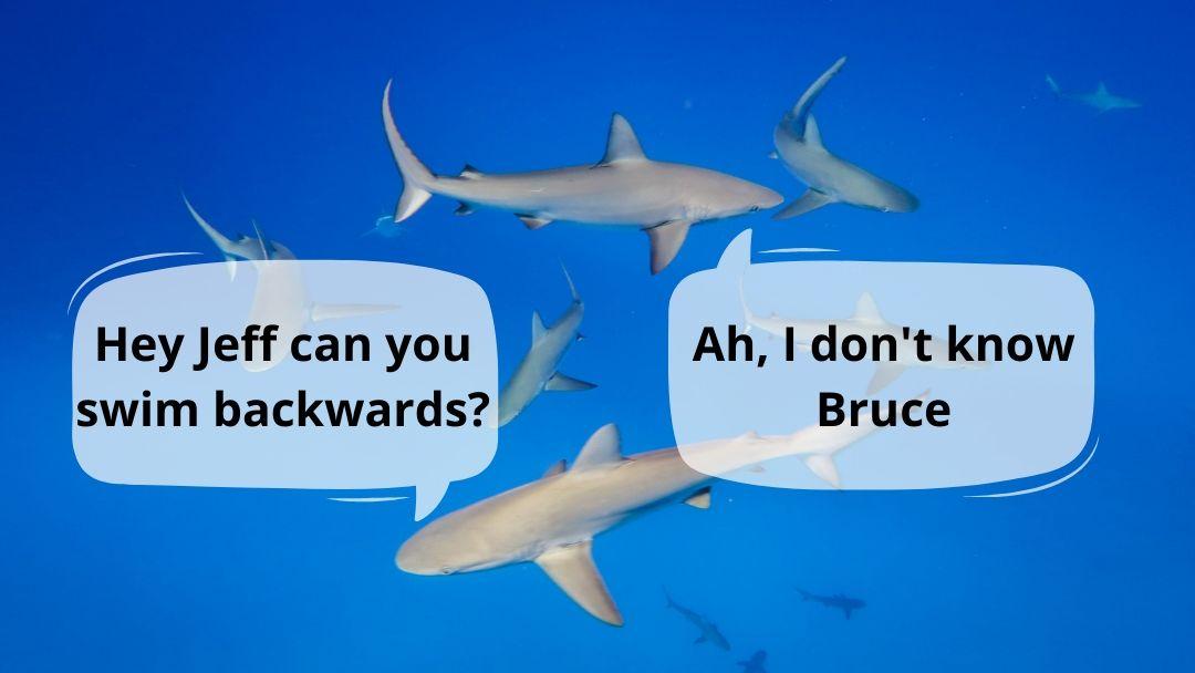 Can Sharks Swim Backwards?