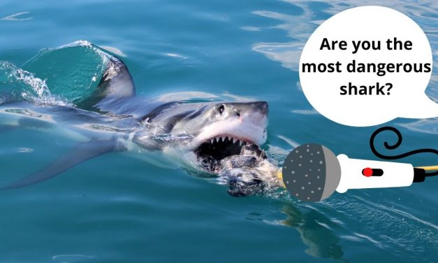 What are the Most Dangerous Sharks?