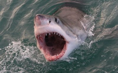 Have you ever wondered how many teeth do sharks have?