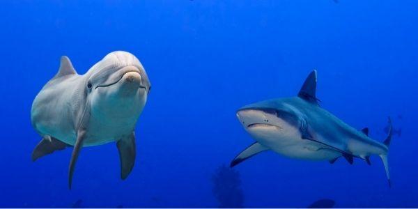 shark and dolphin