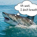 How do sharks breathe?
