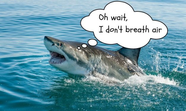 How do sharks breathe?