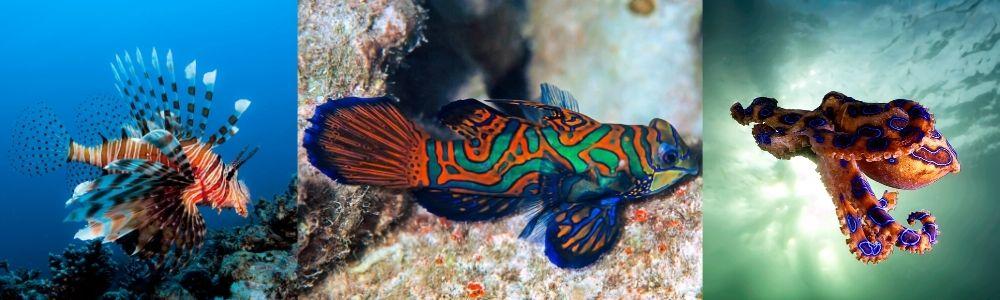 Poisonous sea creatures