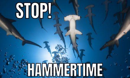 Great Shark Memes
