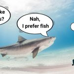 What are sharks attracted to?