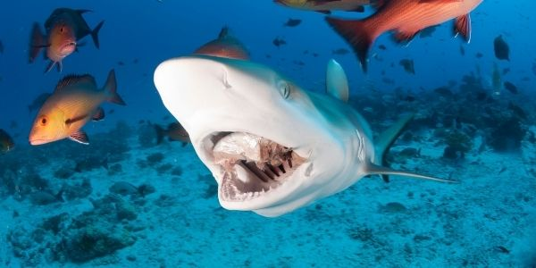 Why do sharks bite people?